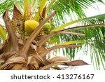 coconut in thailand | Shutterstock . vector #413276167