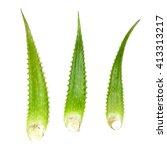 Aloe Vera Leaf Isolated On...