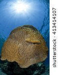 Small photo of Porites Hard Coral underwater landscape and a sun ball