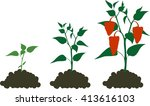 pepper growing stage | Shutterstock . vector #413616103