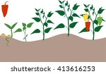 pepper growing stage | Shutterstock . vector #413616253