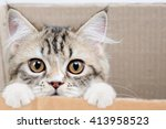 lovely tabby persian cat... | Shutterstock . vector #413958523