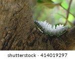 big warm walking on the tree | Shutterstock . vector #414019297