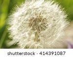 taraxacum or dandelion | Shutterstock . vector #414391087