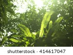 low angle view of fern in... | Shutterstock . vector #414617047
