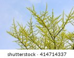 Spring Tree With Young Green...