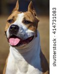 Small photo of American Pit Bull Terrier