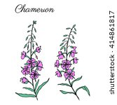 Willow Herb  Chamerion...
