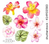 Botanical Illustration With...