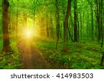 forest with sunlight. the sun... | Shutterstock . vector #414983503