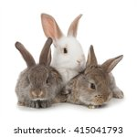 Three Small Rabbit On A White...