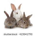 Three Small Rabbit On A White...