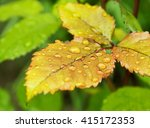 closeup of dew droplets on... | Shutterstock . vector #415172353