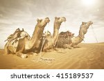 Three Camels Reating In The...