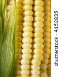 sweetcorn close up | Shutterstock . vector #4152835