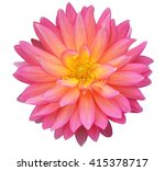 Pink Dahlia Isolated On White...
