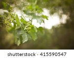 soft nature background | Shutterstock . vector #415590547
