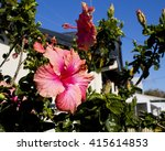 showy pink suffused with orange ... | Shutterstock . vector #415614853