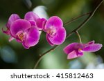 orchid pink | Shutterstock . vector #415812463