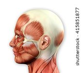 male face muscles anatomy 3d... | Shutterstock . vector #415851877