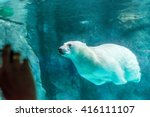 Polar Bear  Also Known As...