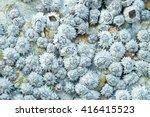 close up shot of dead barnacles ... | Shutterstock . vector #416415523