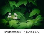 Small photo of Viburnum - genus of woody flowering plants adoxaceae family.