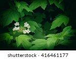 Small photo of Viburnum - genus of woody flowering plants adoxaceae family.