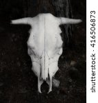 Cow Skull Isolated On Black...