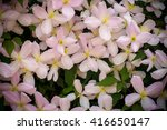 Background Of Pink Flowers Of...