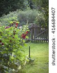 Small photo of impressions from a garden in Brandenburg, Germany. Red blooming hollyhock (Alcea rosea)