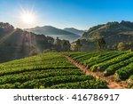 sunrise at strawberry garden at ... | Shutterstock . vector #416786917