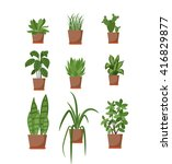 set of house plant isolated... | Shutterstock .eps vector #416829877