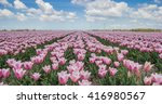 panorama of pink tulips in the... | Shutterstock . vector #416980567