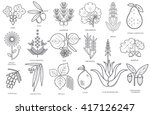 Set Of Medical Herbs  Plants ...