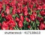tulips flowerbed  field of... | Shutterstock . vector #417138613