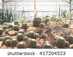 Various Types Of Cactus In The...