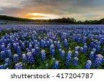 beautiful bluebonnets field at... | Shutterstock . vector #417204787