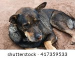 dog lying on the ground to... | Shutterstock . vector #417359533