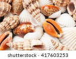 scattered sea shells closeup... | Shutterstock . vector #417603253