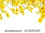yellow flowers isolated on... | Shutterstock . vector #417695107