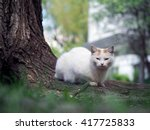 Small photo of Street cat sitting in the grass near the tree. The cat is white. Sick animals, eyes fester. The concept of the problem of stray animals in the cities.