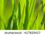 background with green grass... | Shutterstock . vector #417820417