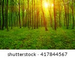 forest with sunlight. the sun... | Shutterstock . vector #417844567