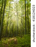 sunshine in the beech forest   Shutterstock . vector #418124023