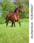 bay horse running free in... | Shutterstock . vector #418140667