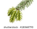 young sprout of spruce isolated ... | Shutterstock . vector #418368793