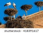Small photo of Storks in San Miguel Collegiate Church, Alfaro (Spain)