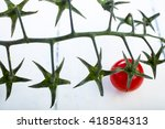 Cherry Tomatoes Isolated