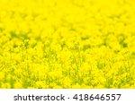 rapeseed field | Shutterstock . vector #418646557